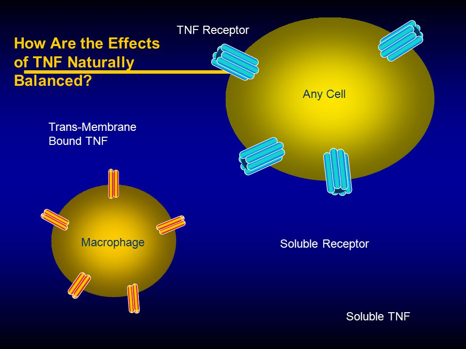 How Are the Effects of TNF Naturally Balanced