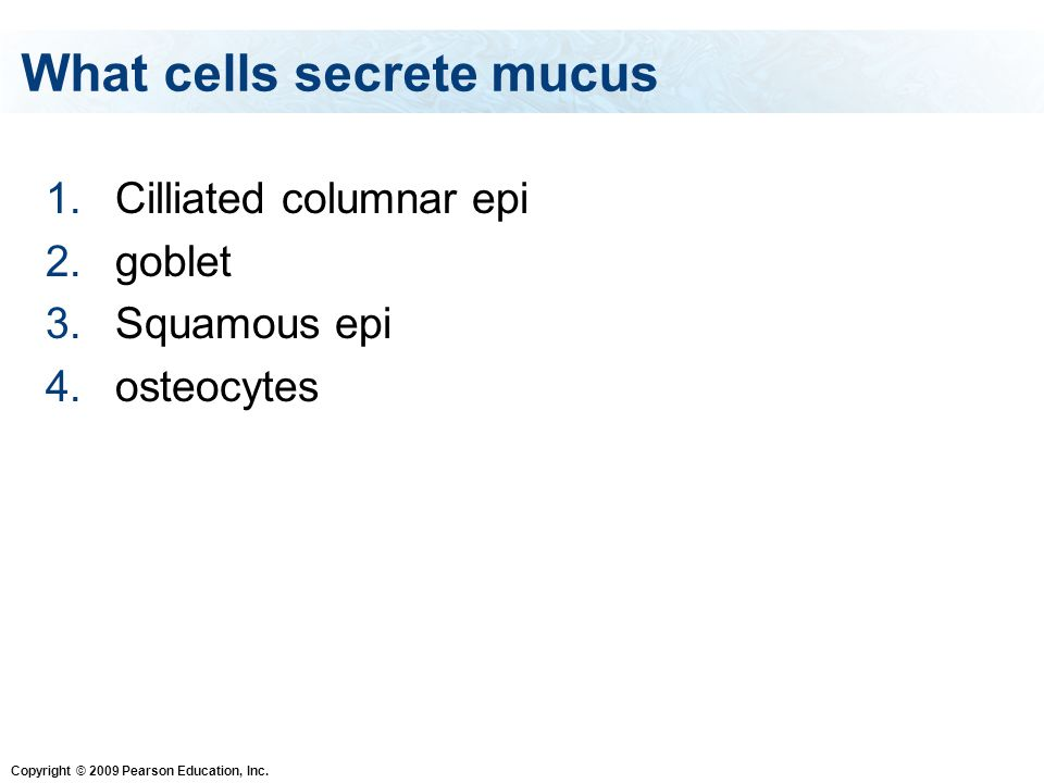 What cells secrete mucus