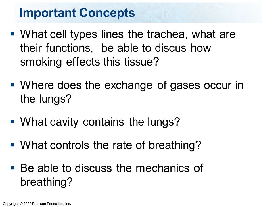 Important Concepts What cell types lines the trachea, what are their functions, be able to discus how smoking effects this tissue