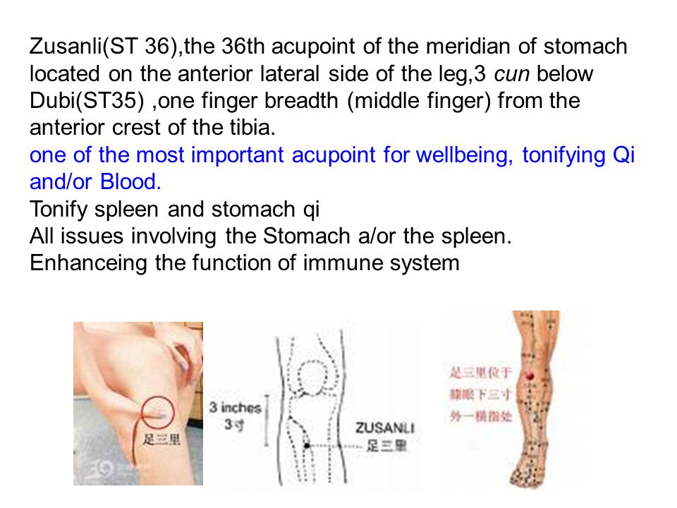 Zusanli(ST 36),the 36th acupoint of the meridian of stomach located on the anterior lateral side of the leg,3 cun below Dubi(ST35) ,one finger breadth (middle finger) from the anterior crest of the tibia.