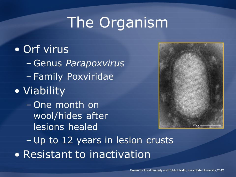 The Organism Orf virus Viability Resistant to inactivation