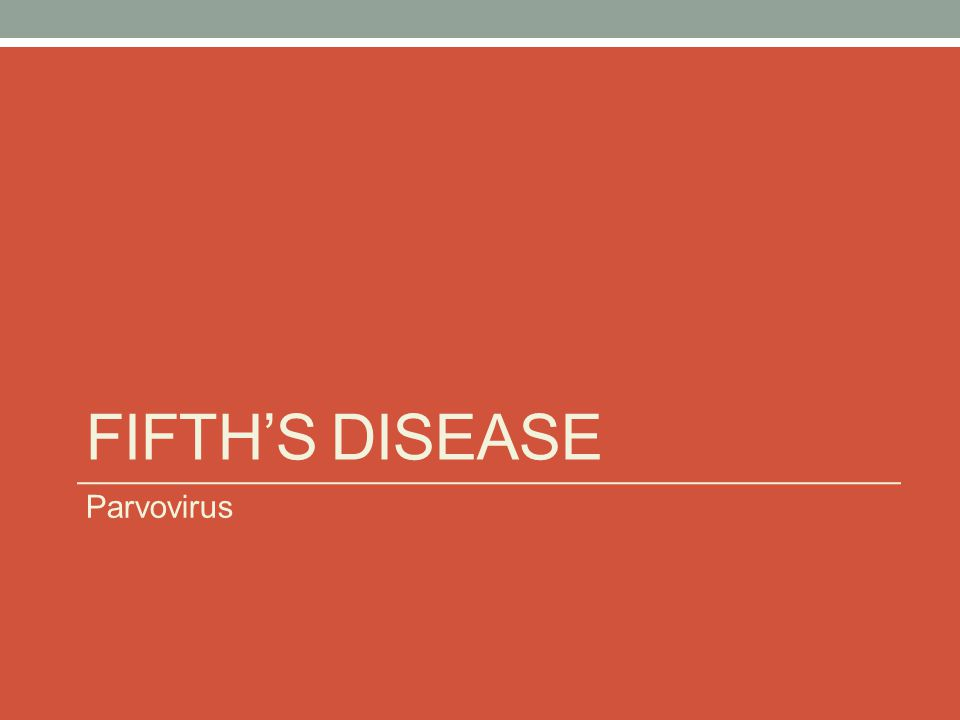 Fifth's Disease Parvovirus