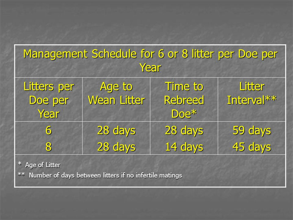 Management Schedule for 6 or 8 litter per Doe per Year