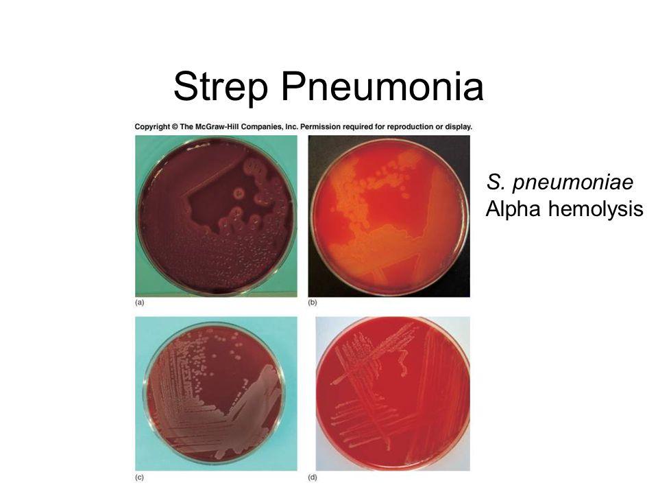 Strep Pneumonia S. pneumoniae Alpha hemolysis