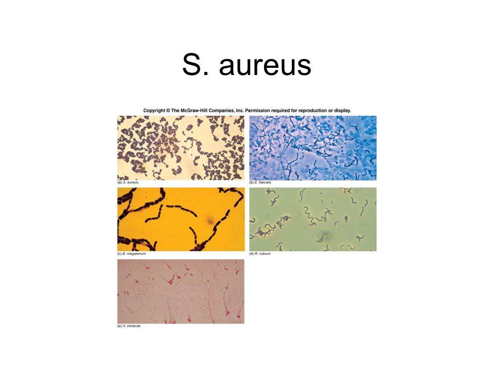 S. aureus