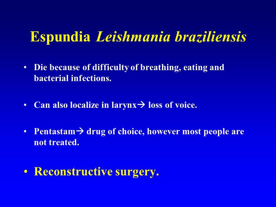 Espundia Leishmania braziliensis
