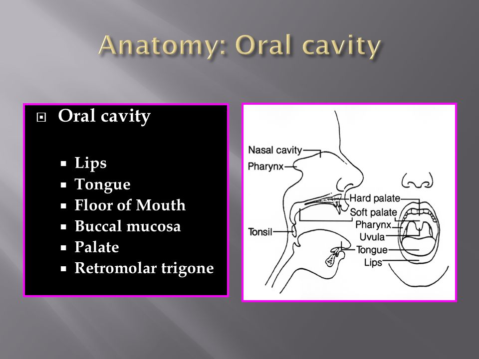 Anatomy: Oral cavity Oral cavity Lips Tongue Floor of Mouth