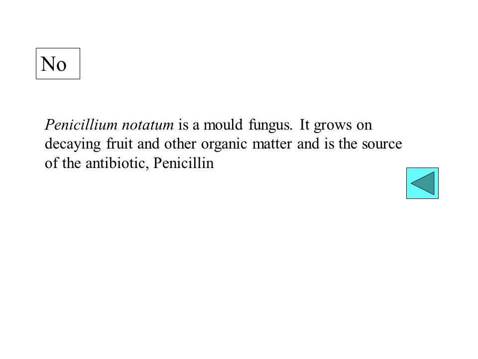 No Penicillium notatum is a mould fungus.