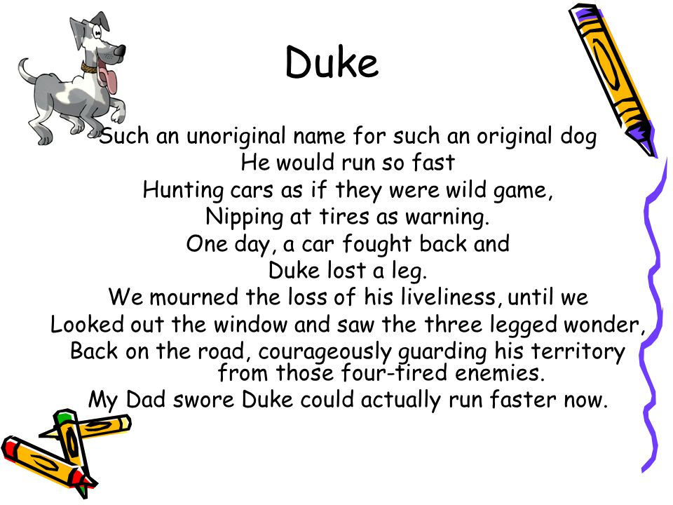 Duke Such an unoriginal name for such an original dog