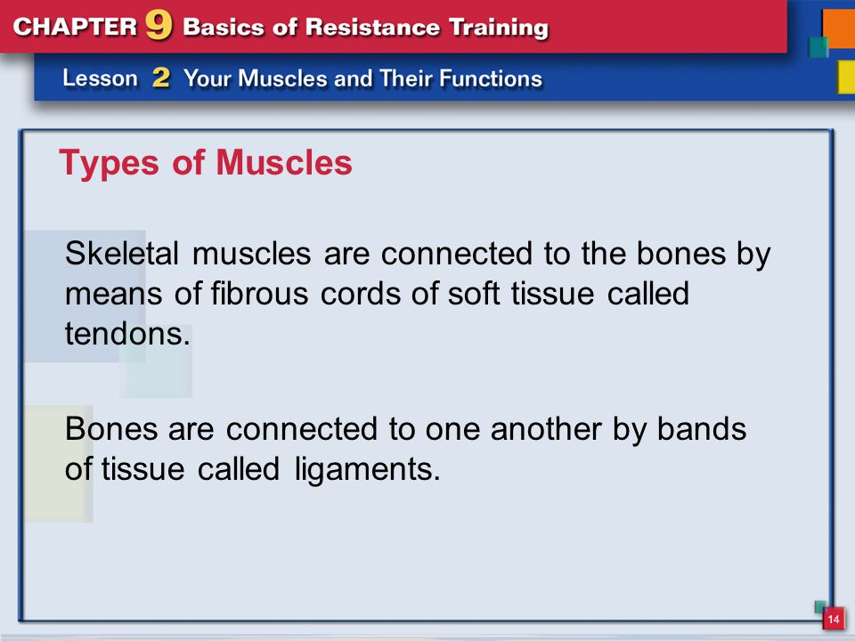 Types of Muscles Skeletal muscles are connected to the bones by means of fibrous cords of soft tissue called tendons.
