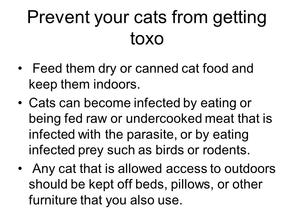 Prevent your cats from getting toxo