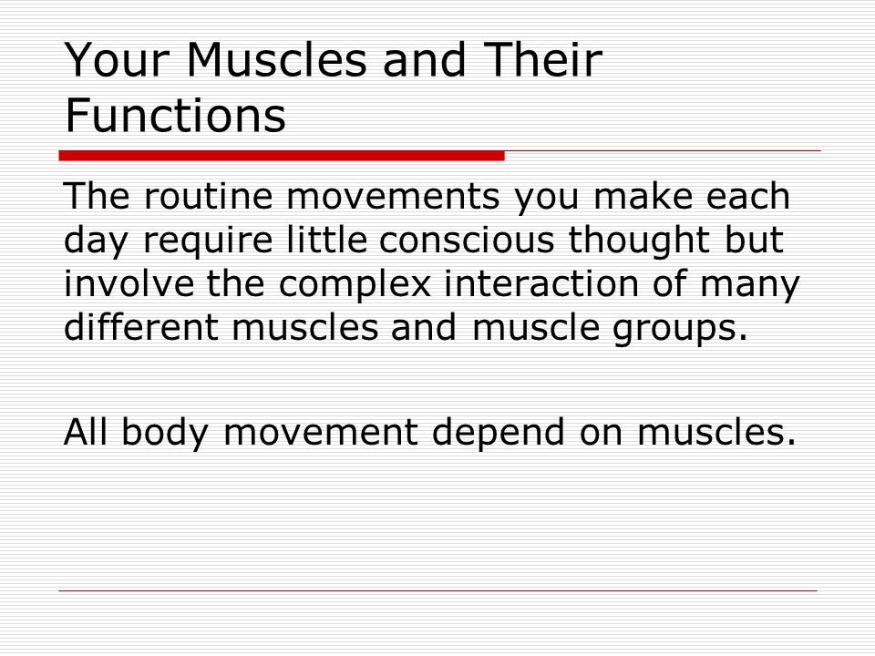 Your Muscles and Their Functions