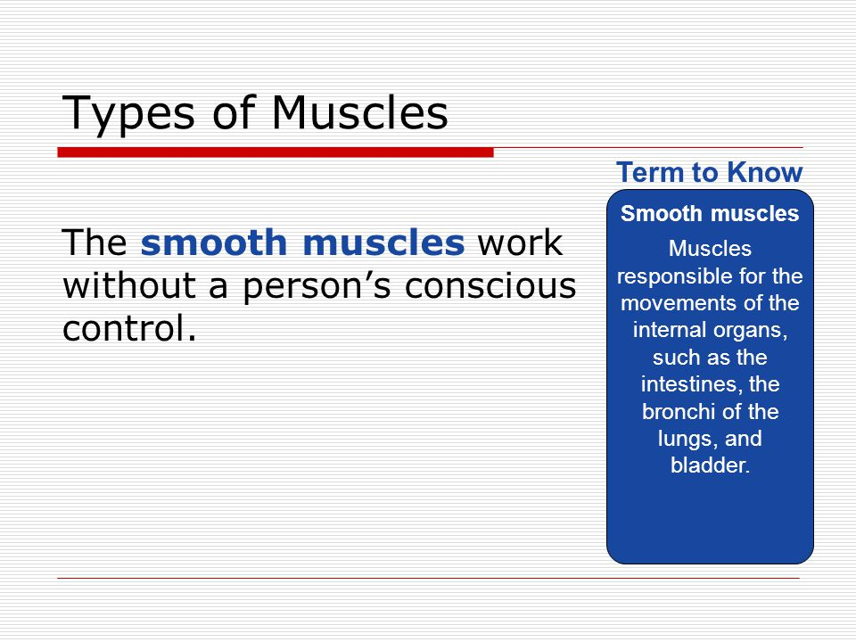 Types of Muscles Smooth muscles.