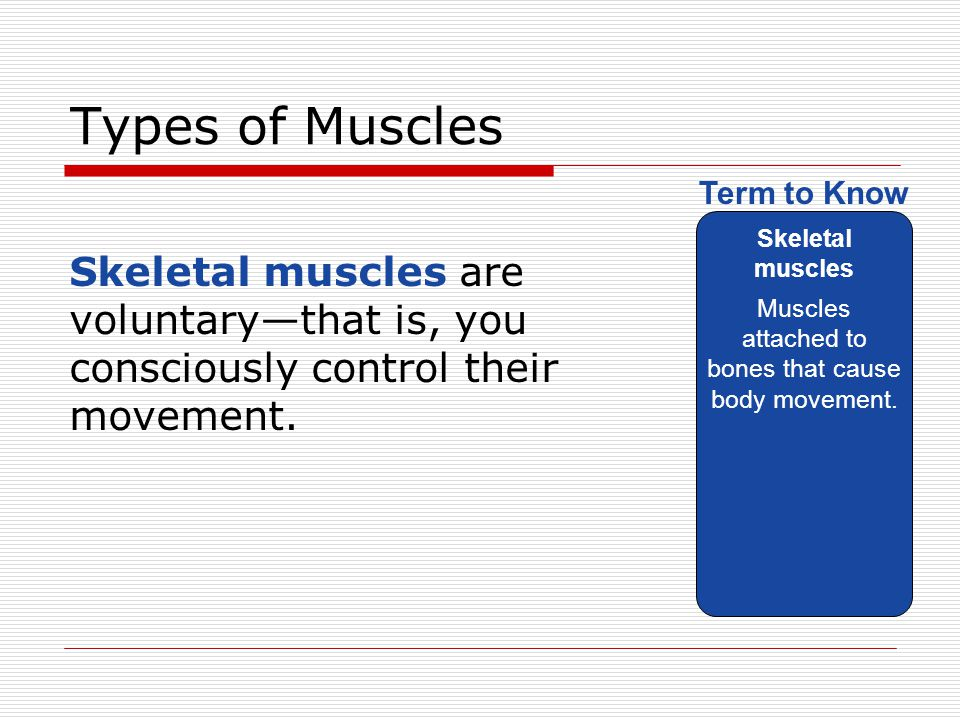 Muscles attached to bones that cause body movement.
