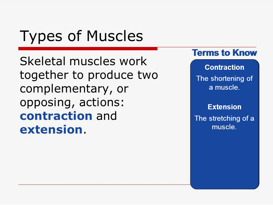 Types of Muscles Contraction. The shortening of a muscle. Extension. The stretching of a muscle.
