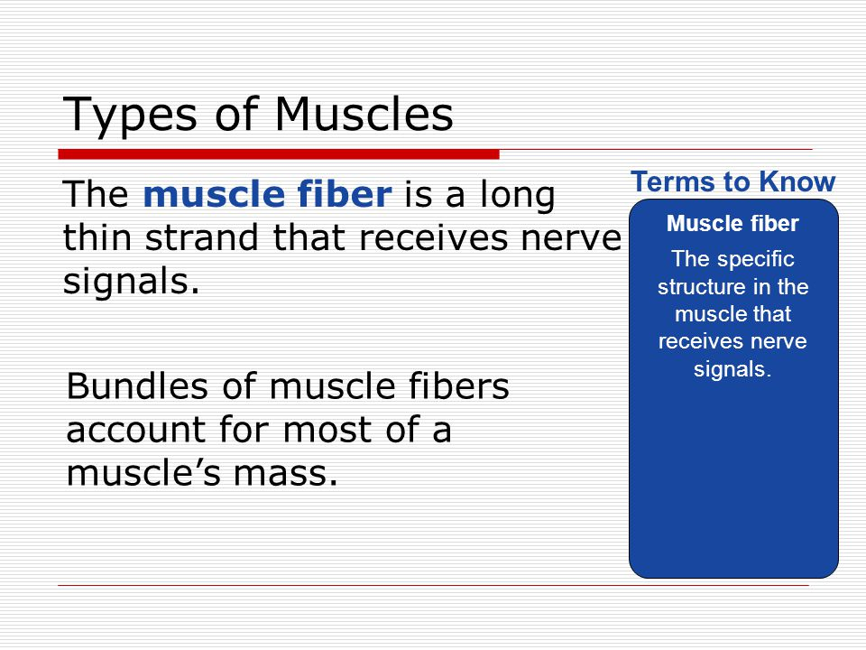 The specific structure in the muscle that receives nerve signals.