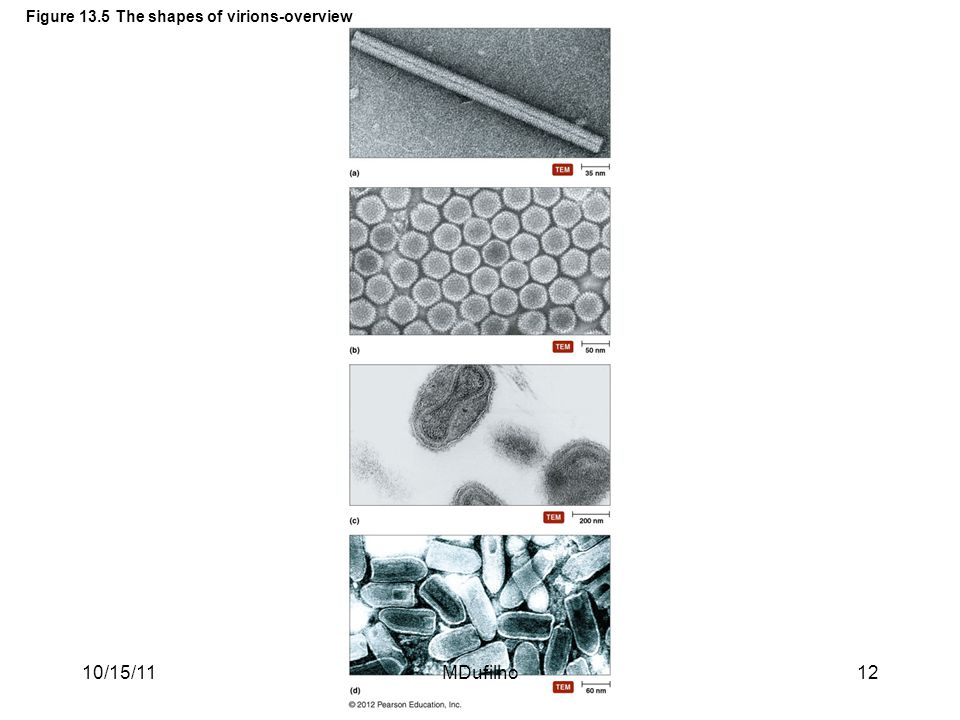 Figure 13.5 The shapes of virions-overview