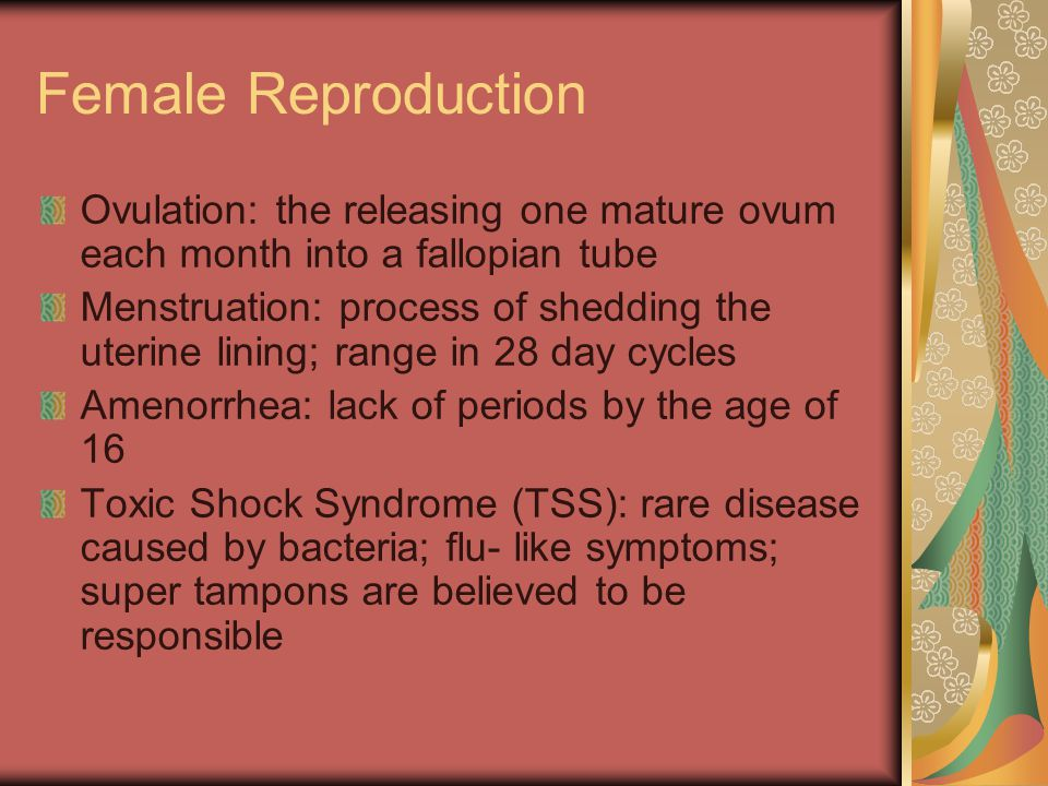Female Reproduction Ovulation: the releasing one mature ovum each month into a fallopian tube.