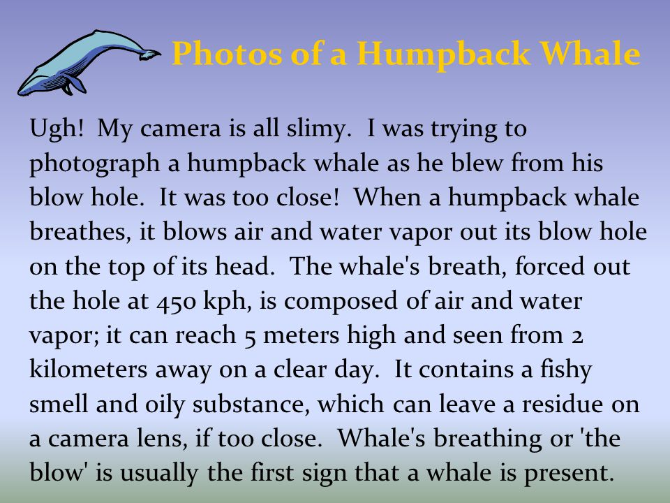 Photos of a Humpback Whale