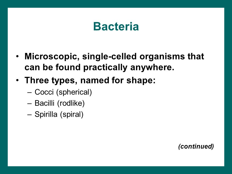Bacteria Microscopic, single-celled organisms that can be found practically anywhere. Three types, named for shape:
