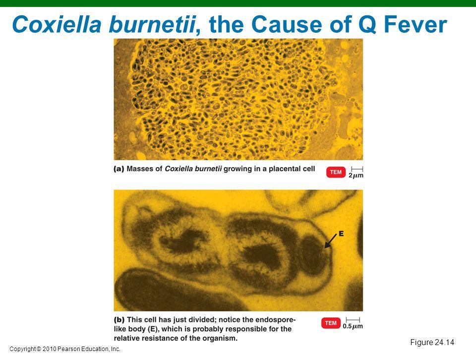 Coxiella burnetii, the Cause of Q Fever