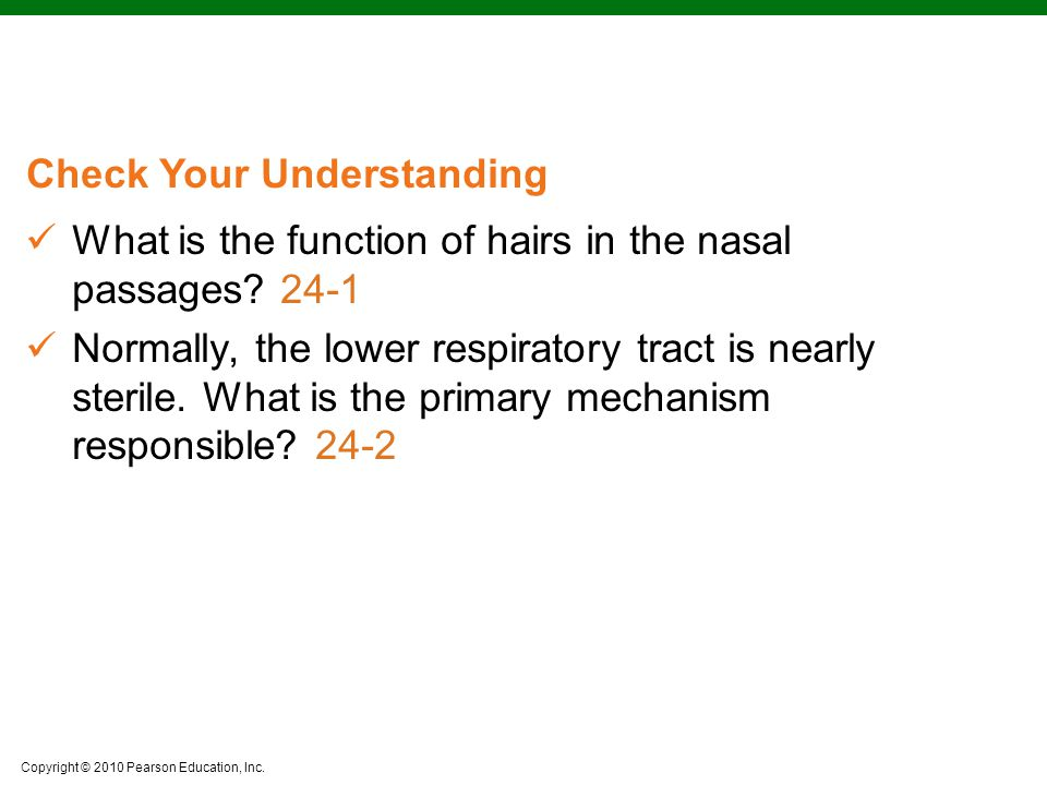 What is the function of hairs in the nasal passages 24-1