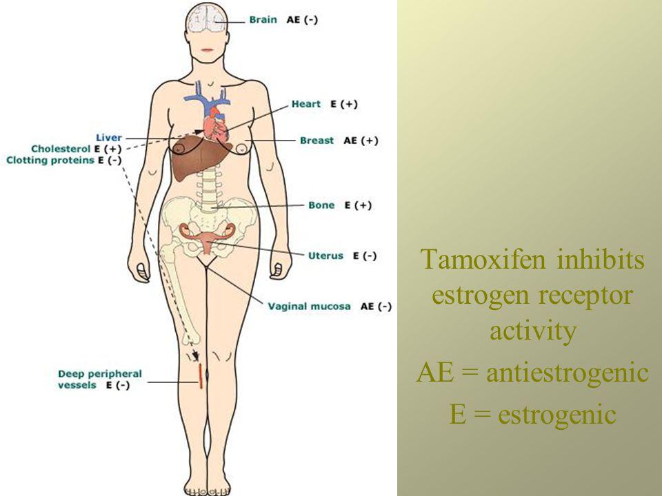 Tamoxifen inhibits estrogen receptor activity