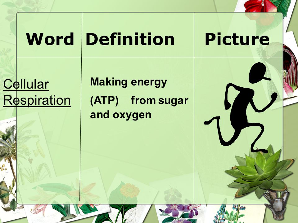 Word Definition Picture