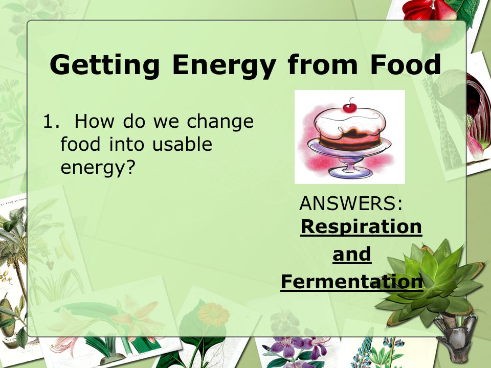 Getting Energy from Food