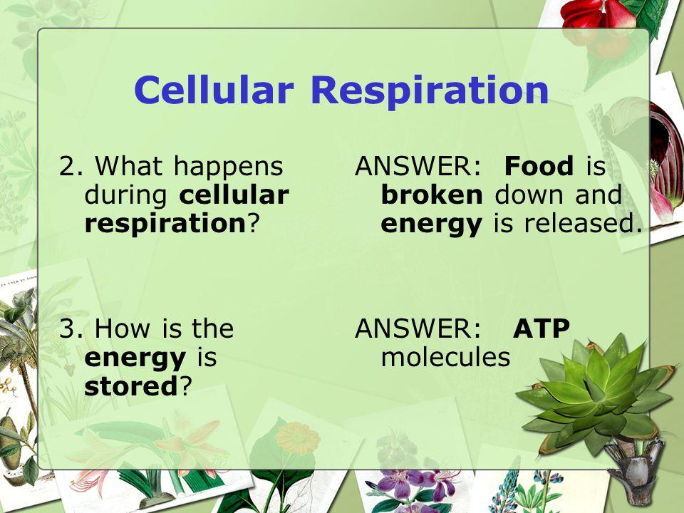 Cellular Respiration 2. What happens during cellular respiration