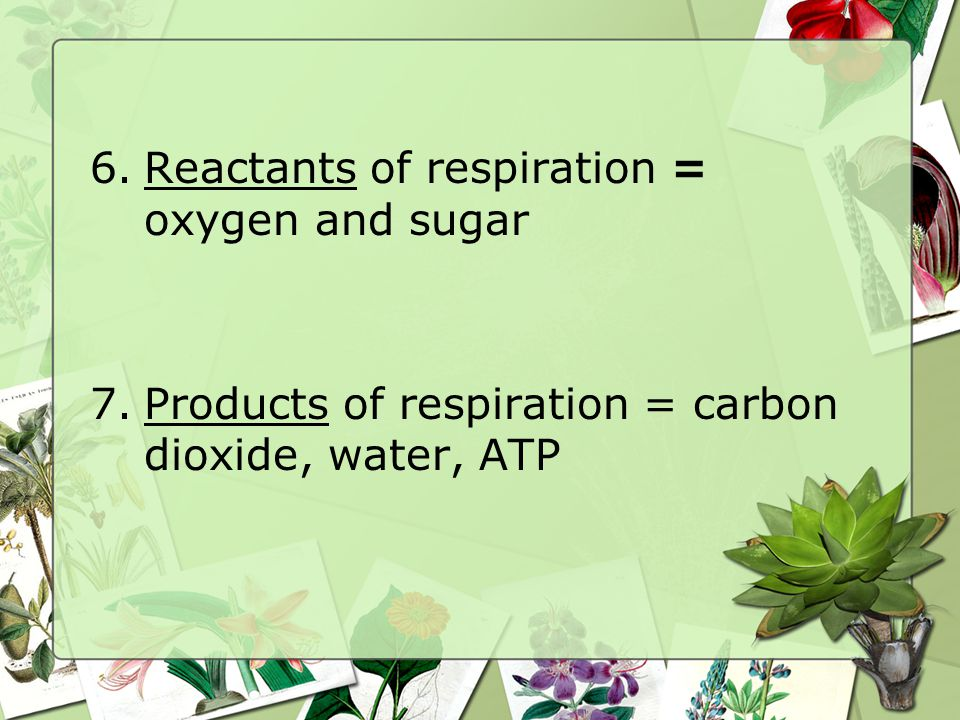 Reactants of respiration = oxygen and sugar