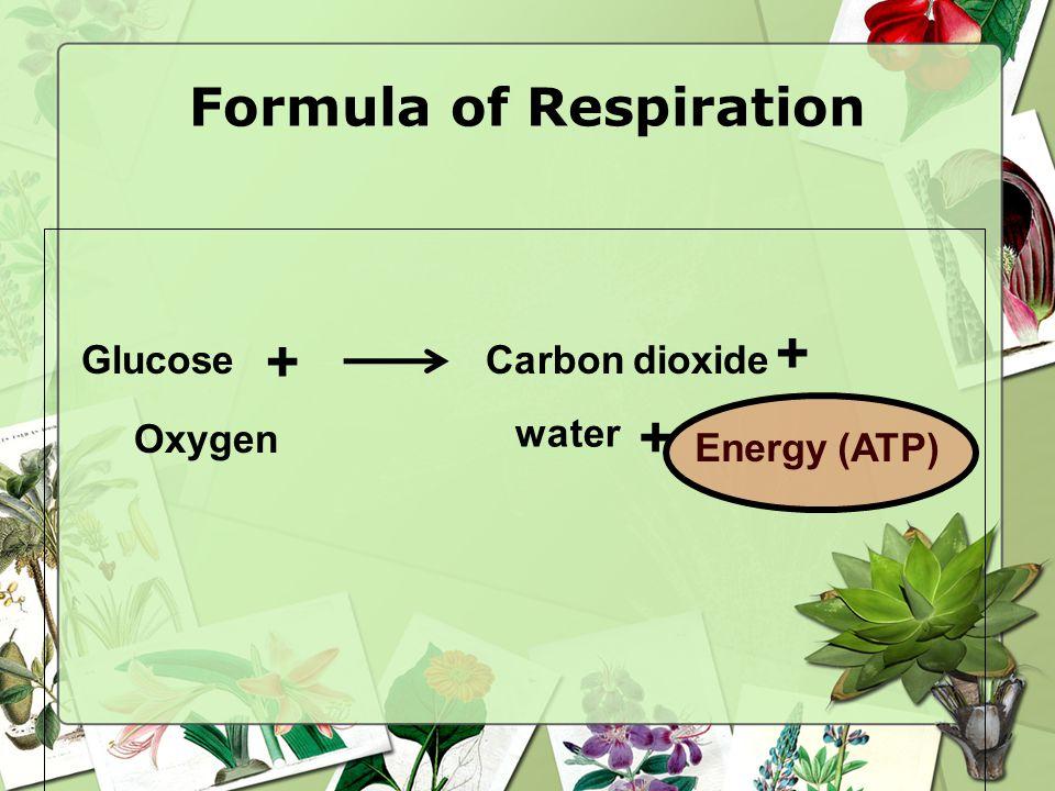 Formula of Respiration