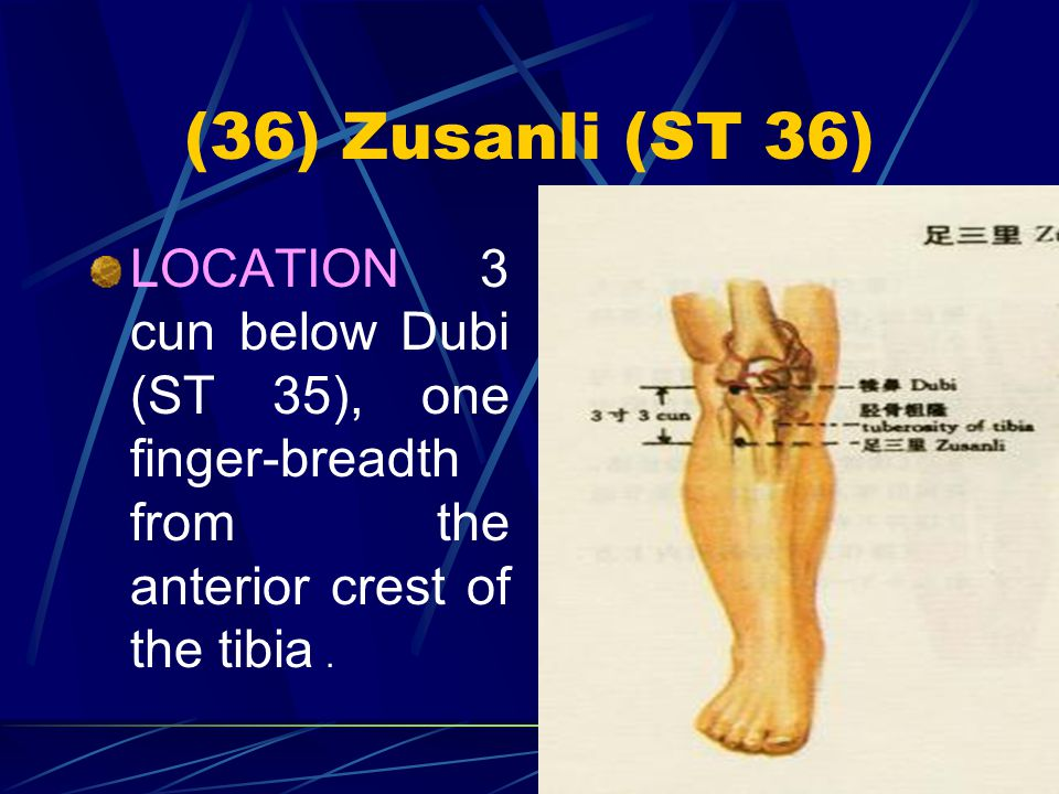 (36) Zusanli (ST 36) LOCATION 3 cun below Dubi (ST 35), one finger-breadth from the anterior crest of the tibia .