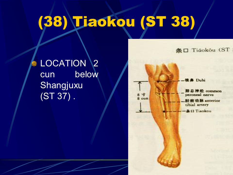 (38) Tiaokou (ST 38) LOCATION 2 cun below Shangjuxu (ST 37) .