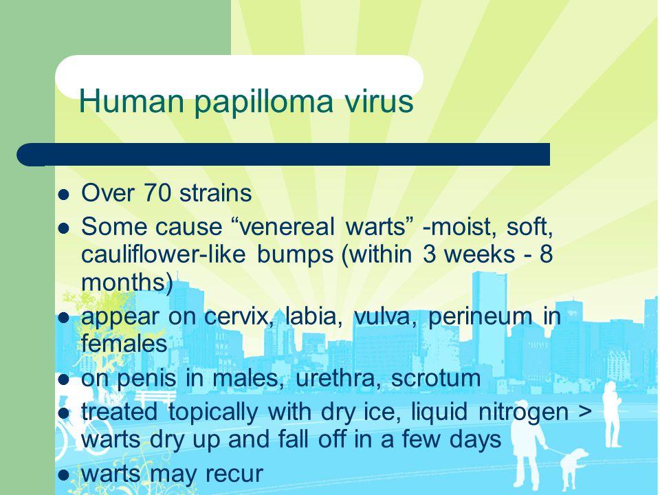 Human papilloma virus Over 70 strains