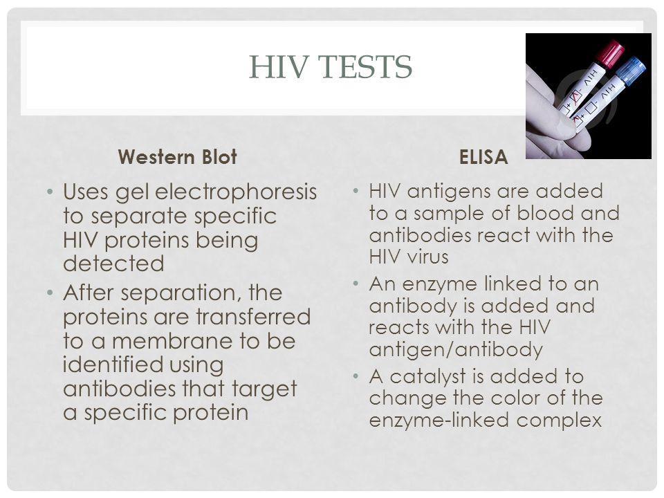 HIV tests Western Blot. ELISA. Uses gel electrophoresis to separate specific HIV proteins being detected.