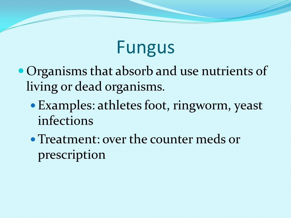 Fungus Organisms that absorb and use nutrients of living or dead organisms. Examples: athletes foot, ringworm, yeast infections.