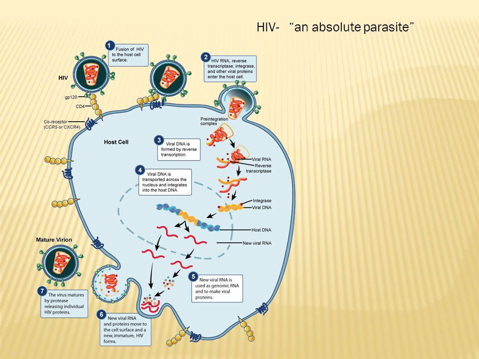 HIV- an absolute parasite
