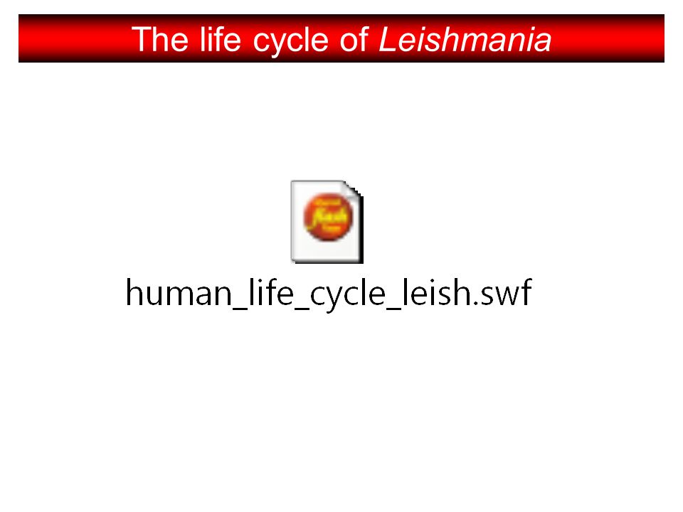 The life cycle of Leishmania