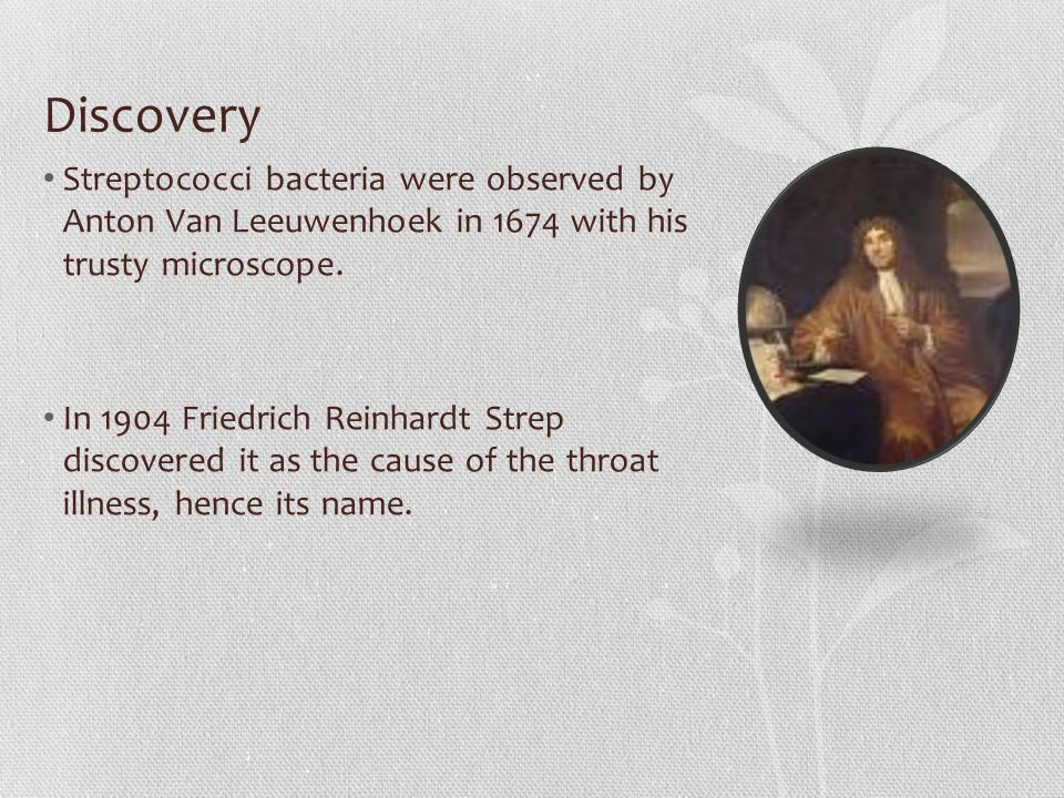 Discovery Streptococci bacteria were observed by Anton Van Leeuwenhoek in 1674 with his trusty microscope.