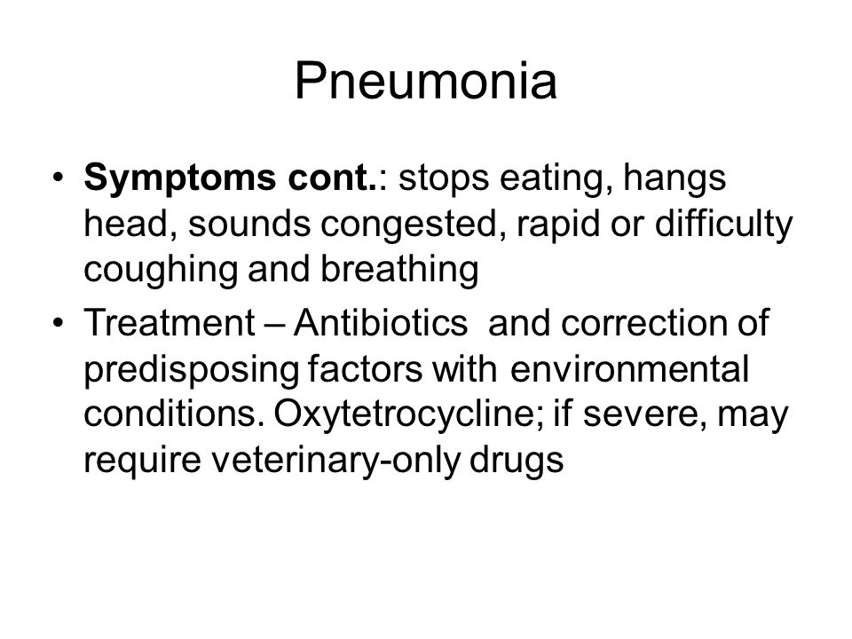 Pneumonia Symptoms cont.: stops eating, hangs head, sounds congested, rapid or difficulty coughing and breathing.