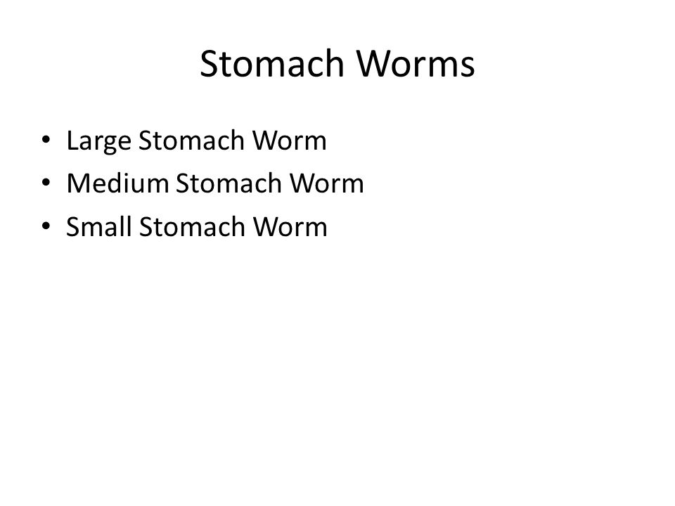 Stomach Worms Large Stomach Worm Medium Stomach Worm