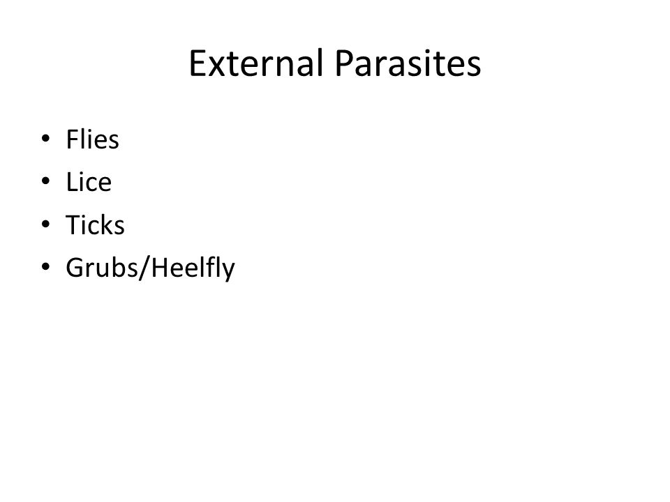 External Parasites Flies Lice Ticks Grubs/Heelfly