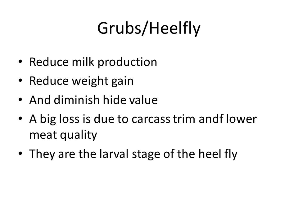 Grubs/Heelfly Reduce milk production Reduce weight gain
