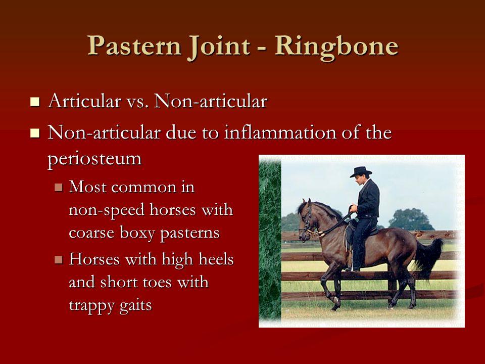Pastern Joint - Ringbone