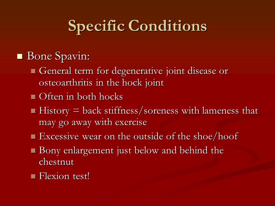 Specific Conditions Bone Spavin: