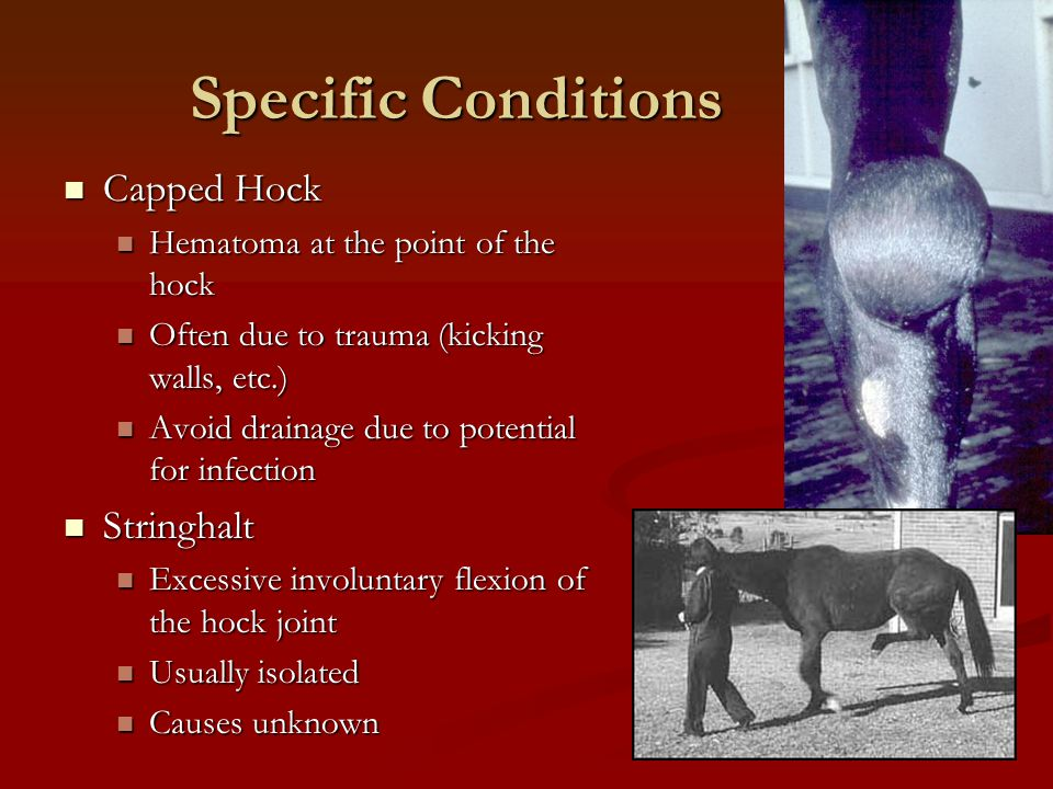 Specific Conditions Capped Hock Stringhalt