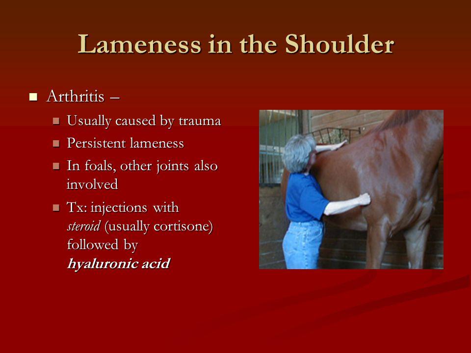 Lameness in the Shoulder