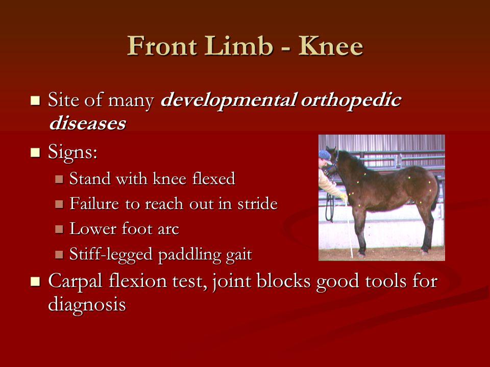 Front Limb - Knee Site of many developmental orthopedic diseases