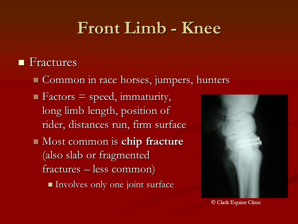 Front Limb - Knee Fractures Common in race horses, jumpers, hunters